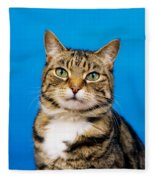 Tabby Cat Fleece Blanket