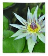 Water Lily  3 Fleece Blanket