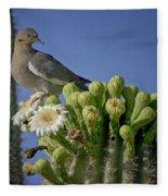 White-winged Dove Atop A Saguaro Fleece Blanket