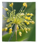 Allium Flavum Or Fireworks Allium Fleece Blanket