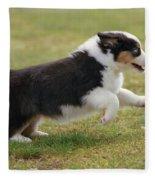 Australian Shepherd Puppy Fleece Blanket