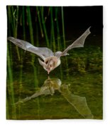 California Leaf-nosed Bat At Pond Fleece Blanket