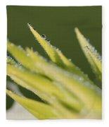 Dwarf Canna Lily Named Ermine Fleece Blanket