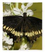 Gold Rim Swallowtail Butterfly Fleece Blanket