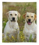 Labrador Retriever Dogs Fleece Blanket