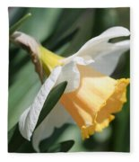 Large-cupped Daffodil Named Mrs. R.o. Backhouse Fleece Blanket