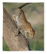 Leopard Panthera Pardus On Tree, Ndutu Fleece Blanket