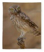 Little Owl Athene Noctua Fleece Blanket