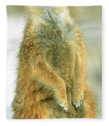 Meerkat Fleece Blanket