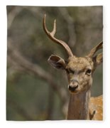 Mesopotamian Fallow Deer  Fleece Blanket