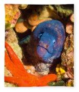 Moray Eel With Starfish Fleece Blanket