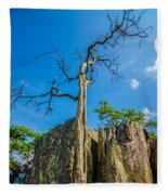 Old And Ancient Dry Tree On Top Of Mountain Fleece Blanket