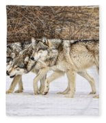 3 Pack Fleece Blanket