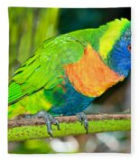 Rainbow Lorikeet Fleece Blanket