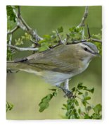 Red-eyed Vireo Fleece Blanket