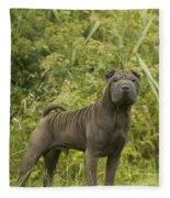 Shar Pei Dog Fleece Blanket