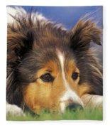 Shetland Sheepdog Fleece Blanket