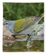 Tennessee Warbler Fleece Blanket