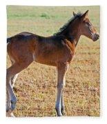 Wild Horse Foal Fleece Blanket