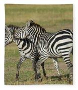 Zebra Males Fighting Fleece Blanket