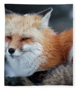 A Red Fox  On The Summit Of Mt Fleece Blanket