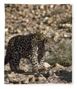 Arabian Leopard Panthera Pardus Fleece Blanket