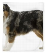 Australian Shepherd Dog Fleece Blanket