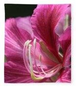 Bauhinia Blakeana - Hong Kong Orchid - Hawaiian Orchid Tree  Fleece Blanket