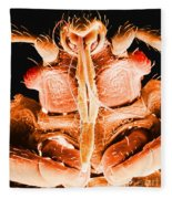 Bedbug Mouthparts, Sem Fleece Blanket