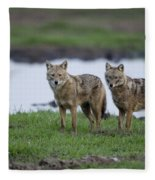 Golden Jackal Canis Aureus Fleece Blanket