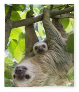 Hoffmanns Two-toed Sloth And Old Baby Fleece Blanket