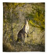 Kangaroo Fleece Blanket