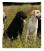 Labrador Retriever Dogs Fleece Blanket