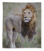 Male Lion Fleece Blanket