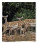 Mesopotamian Fallow Deer  Fleece Blanket