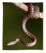Spotted Python Antaresia Maculosa Fleece Blanket