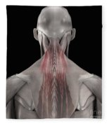 The Muscles Of The Back Fleece Blanket