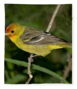Western Tanager Fleece Blanket