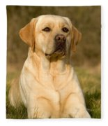 Yellow Labrador Fleece Blanket