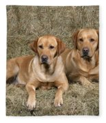 Yellow Labrador Retrievers Fleece Blanket