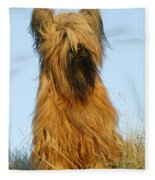 Briard Dog Fleece Blanket