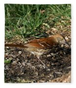 Brown Thrasher Fleece Blanket