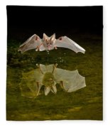 California Leaf-nosed Bat At Pond Fleece Blanket
