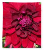 Dahlia Named Nuit D'ete Fleece Blanket