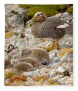 Falkland Steamerduck Fleece Blanket