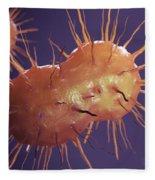 Neisseria Gonorrhoeae Bacteria Fleece Blanket