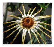 Osteospermum Named African Moon Fleece Blanket