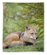 Patagonian Red Fox Fleece Blanket