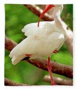 White Ibis Eudocimus Albus Fleece Blanket
