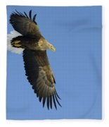 White-tailed Eagle Fleece Blanket